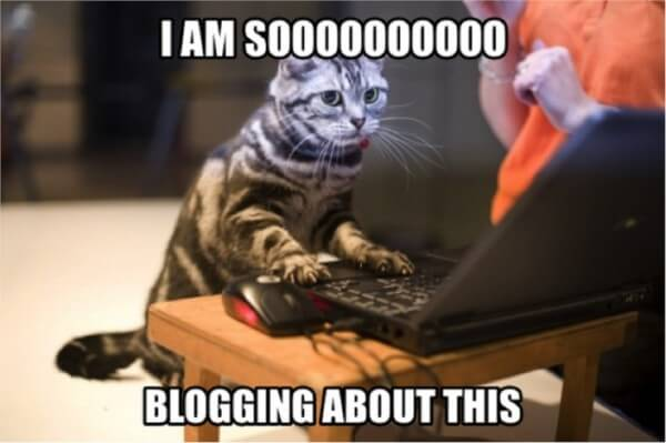 cat sitting at computer says I am soooooo blogging about this