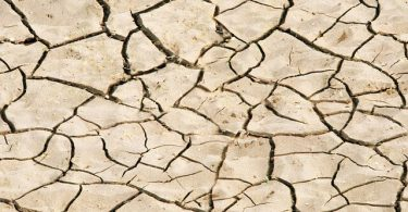 cracked dry ground that looks brittle